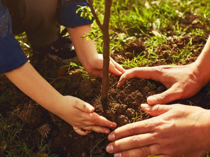 kiedy sadzic drzewka
