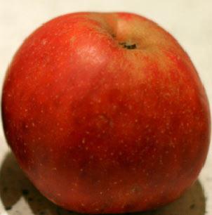 jabłoń red boskop