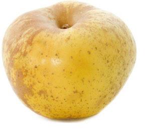 jabłoń szara reneta