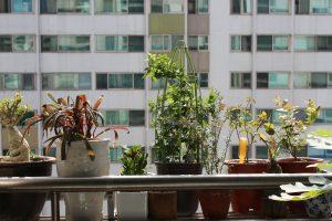 rośliny doniczkowe zimą