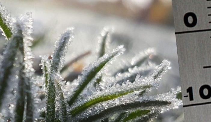zimowe prace w ogrodzie