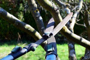 przycinanie krzewów owocowych