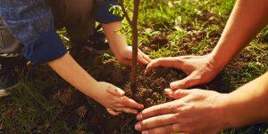 prawidłowe sadzenie drzew owocowych