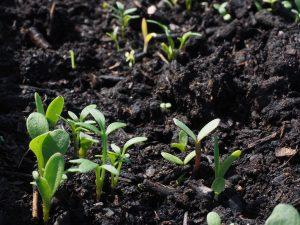 gleba i jej wpływ na plonowanie roślin